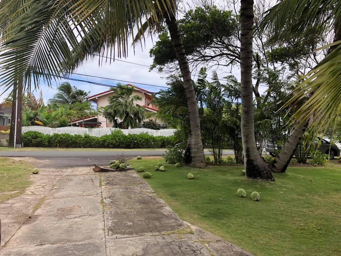 Coconut Branch Broke